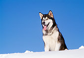 DOG 01 RK0119 03