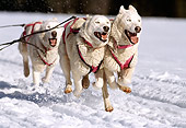 DOG 01 RK0147 02