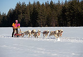 DOG 01 RK0148 09
