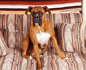 DOG 01 RK0164 05