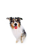 DOG 01 RK0177 02