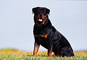 DOG 01 RK0188 02