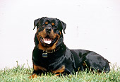 DOG 01 RK0192 02