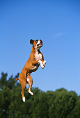DOG 01 RK0219 05