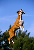 DOG 01 RK0219 12