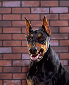 DOG 01 RK0228 05