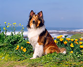 DOG 01 RK0253 06