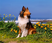 DOG 01 RK0254 03