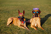 DOG 01 RK0267 12