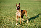 DOG 01 RK0273 04