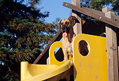 DOG 01 RK0279 01