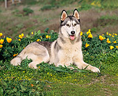 DOG 01 RK0289 02