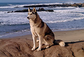 DOG 01 RK0291 01