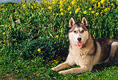 DOG 01 RK0295 03