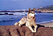 DOG 01 RK0296 05