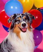 DOG 01 RK0309 02