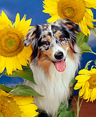 DOG 01 RK0310 02