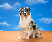DOG 01 RK0312 03