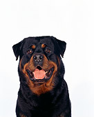 DOG 01 RK0320 05