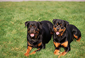 DOG 01 RK0337 03