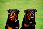 DOG 01 RK0338 08