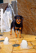 DOG 01 RK0352 04
