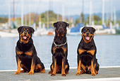 DOG 01 RK0363 05