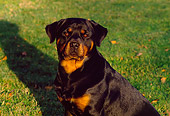 DOG 01 RK0365 04