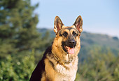 DOG 01 RK0375 10