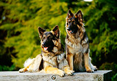 DOG 01 RK0381 06