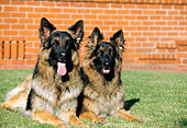 DOG 01 RK0382 04