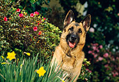 DOG 01 RK0393 08