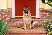 DOG 01 RK0415 05