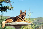 DOG 01 RK0429 04