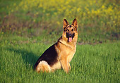 DOG 01 RK0441 06