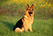 DOG 01 RK0441 10