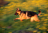 DOG 01 RK0450 01