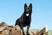 DOG 01 RK0459 03