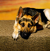 DOG 01 RK0471 01