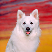 DOG 01 RK0477 05