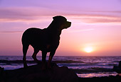 DOG 01 RK0615 03