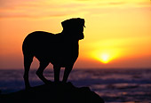 DOG 01 RK0615 04