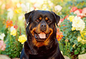 DOG 01 RK0623 09