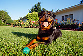 DOG 01 RK0628 06