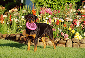 DOG 01 RK0630 02