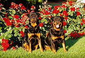 DOG 01 RK0642 11