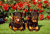 DOG 01 RK0643 09