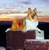 DOG 01 RK0648 04