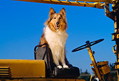 DOG 01 RK0661 02
