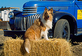 DOG 01 RK0662 07